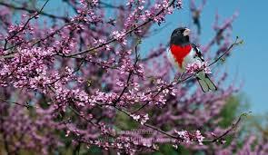 Spring Has Sprung in Tellico Village 4